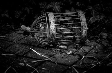old-broken-rusted-bird-cage-260nw-439867897